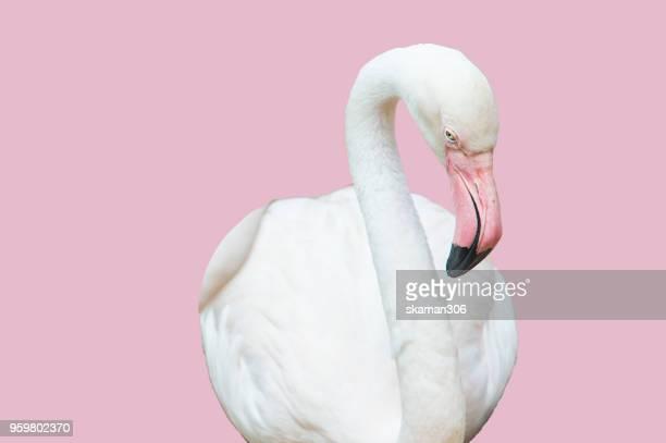 beautiful flamingo bird with pastel background - flamingo imagens e fotografias de stock
