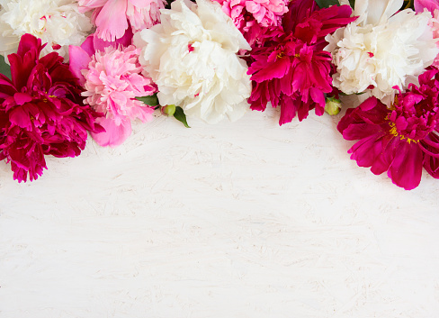 Beautiful Flower background with peony flowers 924111780