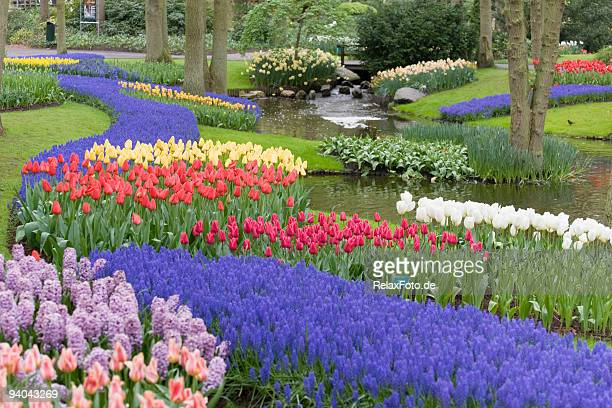 beautiful flower bed of multicolored tulips in park (xxl) - garden of eden old testament stock photos and pictures