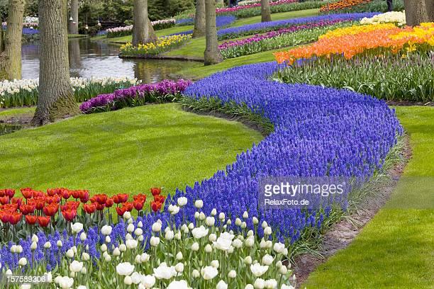 bellissimo fiore letto di tulipani di keukenhof nel parco (xxxl - bicolore colore foto e immagini stock