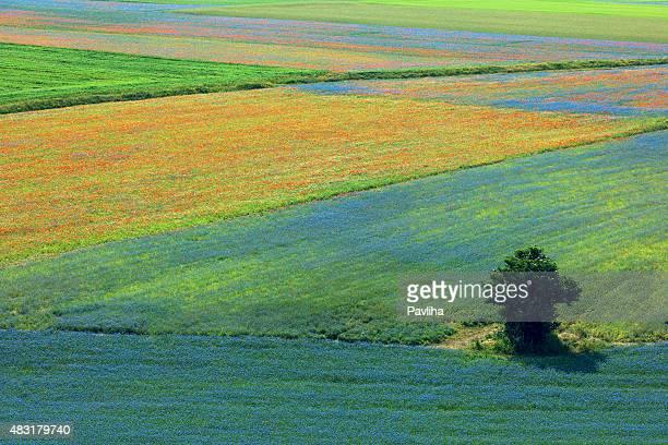 bellissimo fiore campo, bush, albero, castelluccio di norcia, umbria, italia - castelluccio di norcia foto e immagini stock