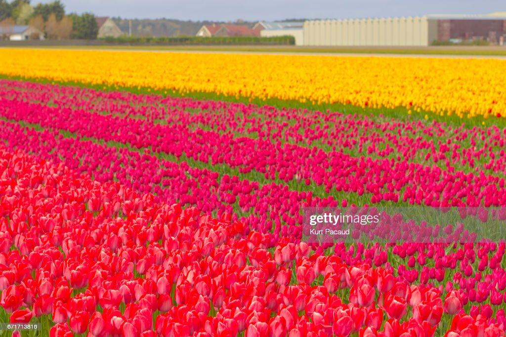 Schöne Blumenwiese Im Frühling In Den Niederlanden Stock Foto