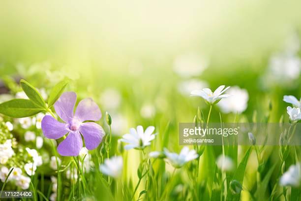 Schöne Blume im Feld
