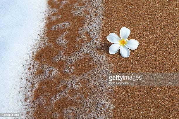 A beautiful flower on a Thai beach