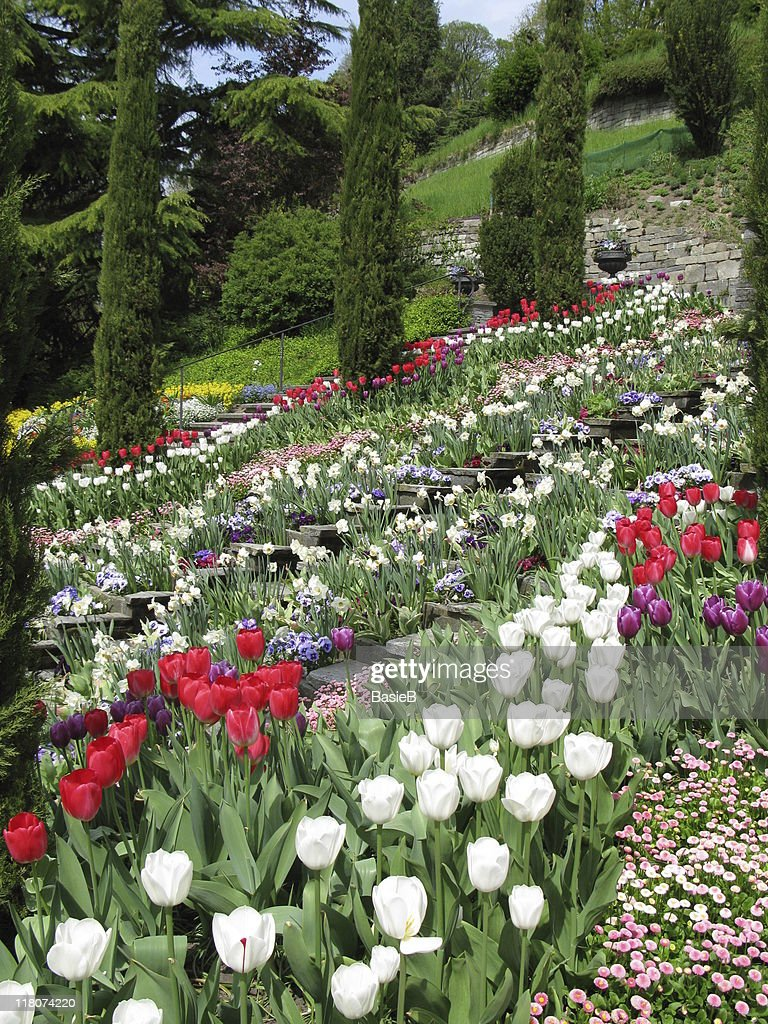 Beautiful Flower Park Insel Mainau Stock Photo Getty Images