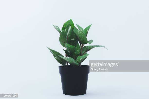 beautiful flowerpot isolated on white background. with copy space for texts, perfect for wallpaper. for designer use. pastel color. - 鉢植え ストックフォトと画像