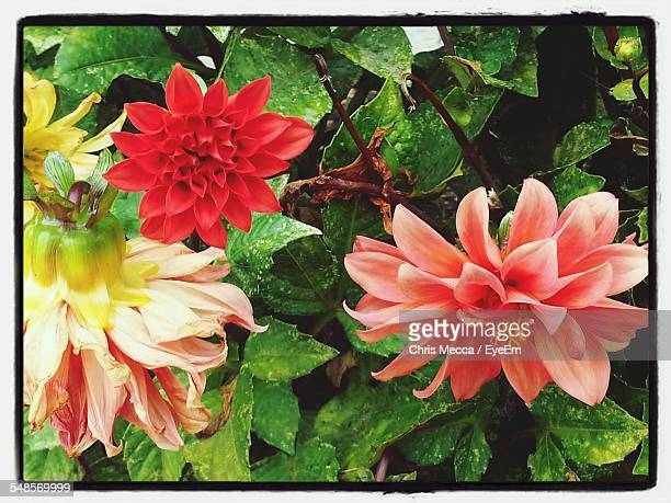 beautiful flowers blooming outdoors - transferbild stock-fotos und bilder