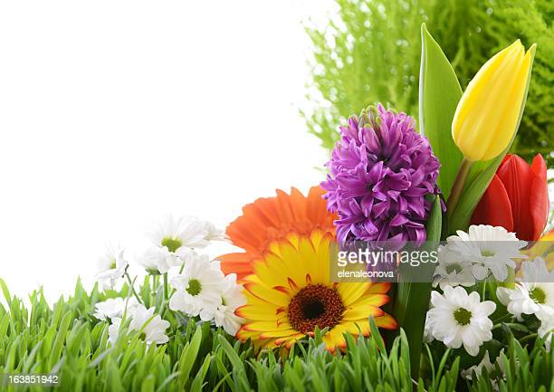 beautiful flowers - ornamental plant stock pictures, royalty-free photos & images