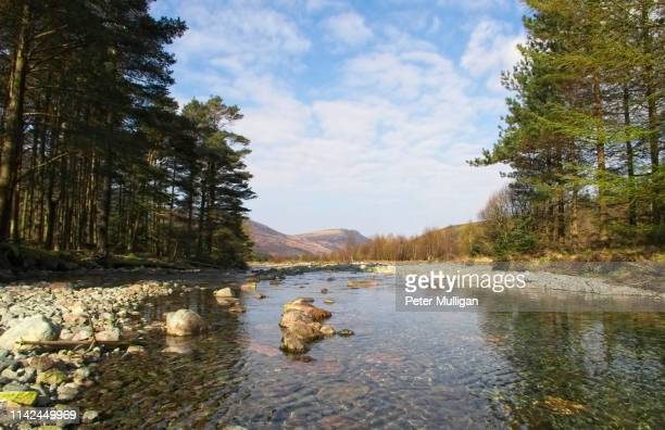 beautiful forest scenery by the river liza in ennerdale, english lake district - pine woodland stock pictures, royalty-free photos & images