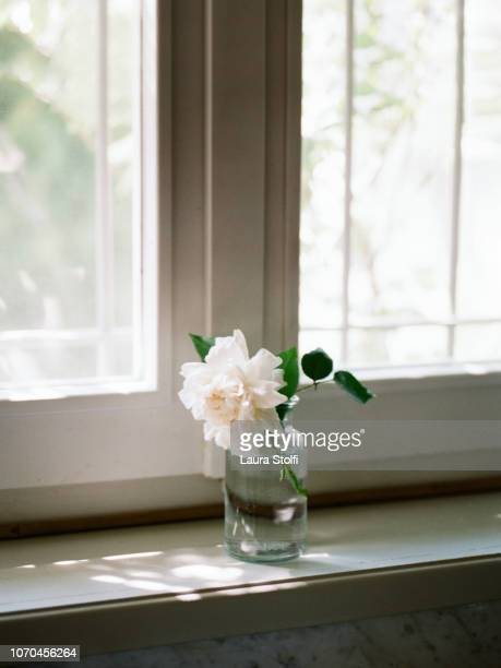 beautiful fresh cut rose inside water bottle on wooden windowsill at home - 花瓶 ストックフォトと画像