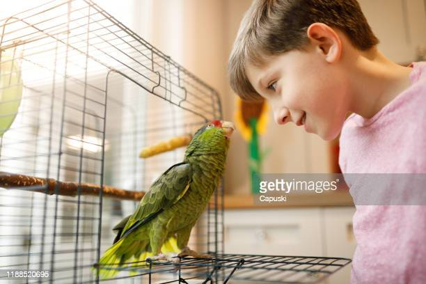 beautiful friendship between kid and parrot - bird stock pictures, royalty-free photos & images