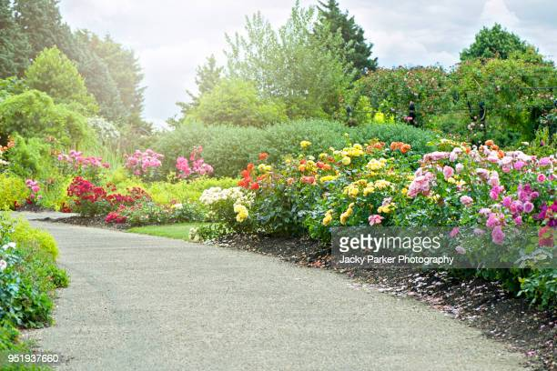 a beautiful garden path with summer roses either side in hazy sunshine - sonnig stock-fotos und bilder