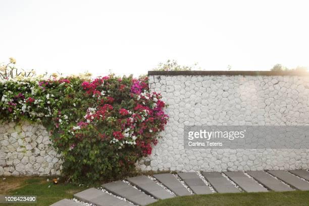 Beautiful garden wall at sunset