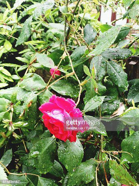 beautiful glimpse into the natural world - jena rose stock pictures, royalty-free photos & images