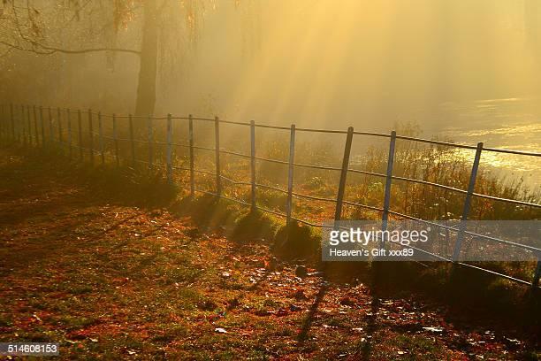 Beautiful golden sunrays shining down over pond