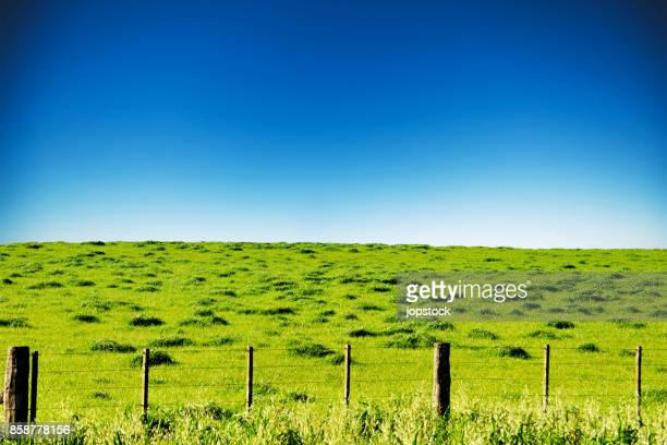 Beautiful green field grass with wire fence
