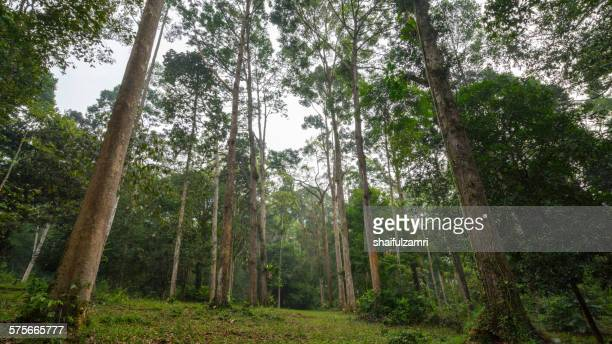 beautiful green forest in malaysia - shaifulzamri foto e immagini stock