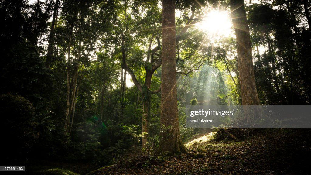 Beautiful green forest : Stock Photo