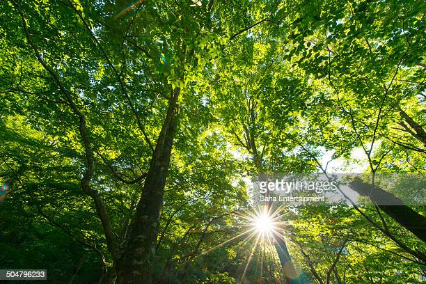 beautiful green forrest and sunbeam - saha entertainment stock pictures, royalty-free photos & images