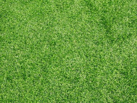 Beautiful green grass pattern from golf course 1092533224