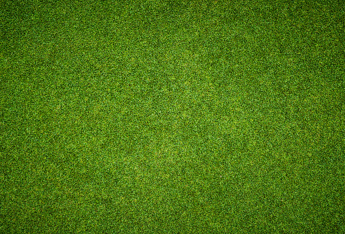 Beautiful green grass pattern from golf course 535983237