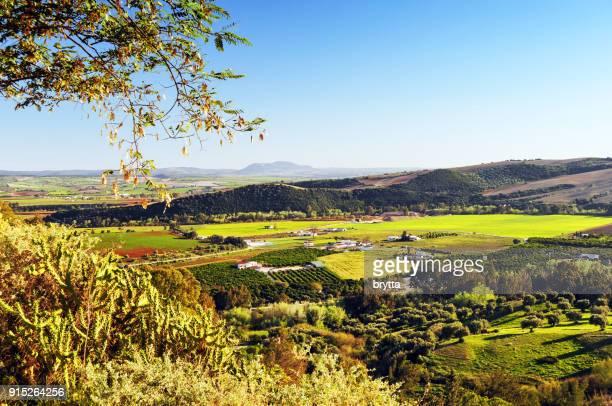 hermoso paisaje verde en primavera, andalucía, españa - cielo despejado fotografías e imágenes de stock
