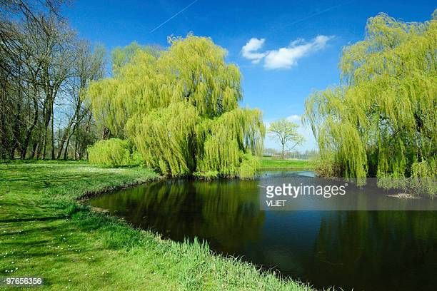 A beautiful green landscape of nature in the springtime