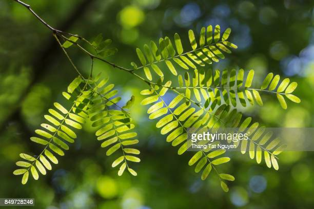 Beautiful green leaf in sunlight