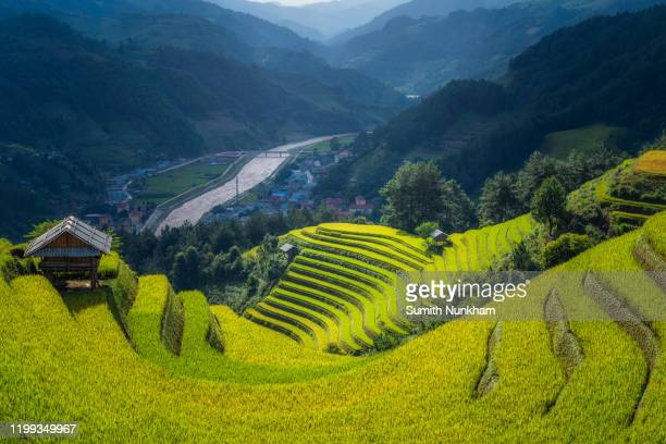 beautiful green rice fields terraced in rainy season with city village and surrounded by mountains at mu cang chai, yen bai, northern vietnam, vietnam landscapes rice fields terraced. - muş city turkey stock pictures, royalty-free photos & images