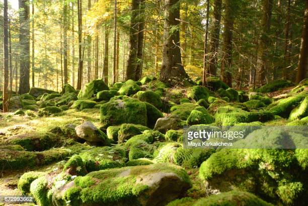 beautiful green stones in an autumn forest - moss stock pictures, royalty-free photos & images