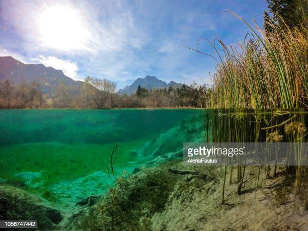 beautiful green water spring of zelenci in autumn, half under water and half above - riva del fiume foto e immagini stock