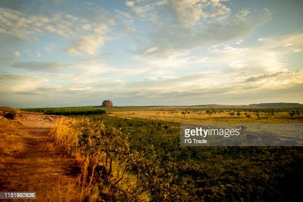 beautiful horizon in jalapão - cerrado stock pictures, royalty-free photos & images
