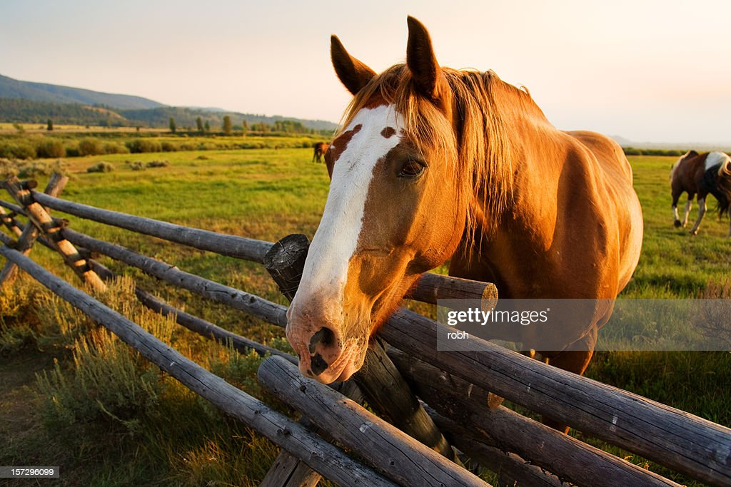 Beautiful Horse At Sunset High Res Stock Photo Getty Images