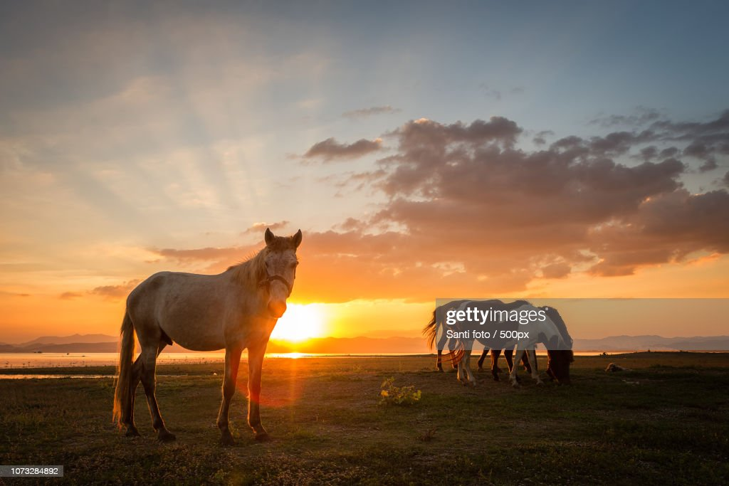 Beautiful Horse Eating Grass On Beside River At Sunset High Res Stock Photo Getty Images