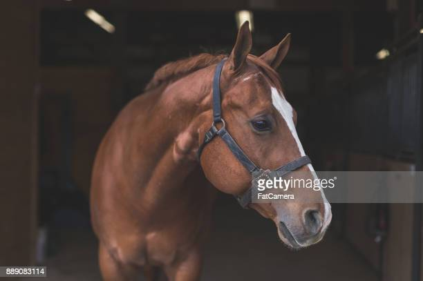 beautiful horse in the country - horse stock pictures, royalty-free photos & images