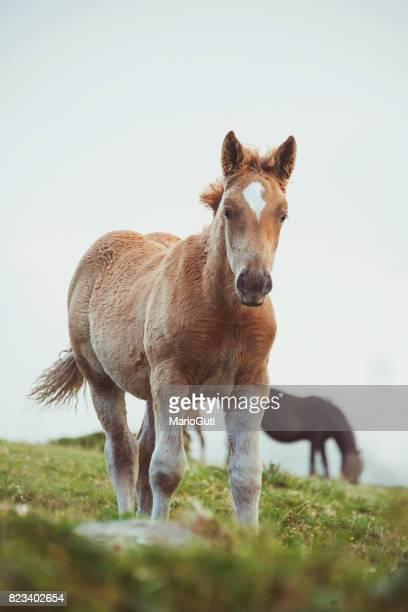 Hermoso caballos
