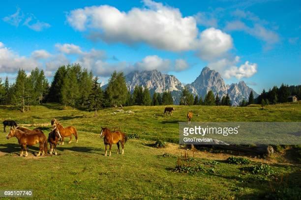 ドロミテの緑の牧草地の美しい馬 - 家畜柵 ストックフォトと画像