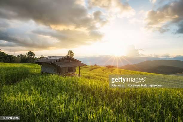 A beautiful hut in the sun light