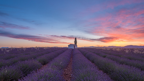 Beautiful image of lavender field Summer sunset landscape, Valensole plateau in the Provence in southern France. - gettyimageskorea