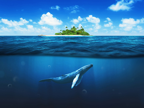 Beautiful island with palm trees. Whale underwater 471484780