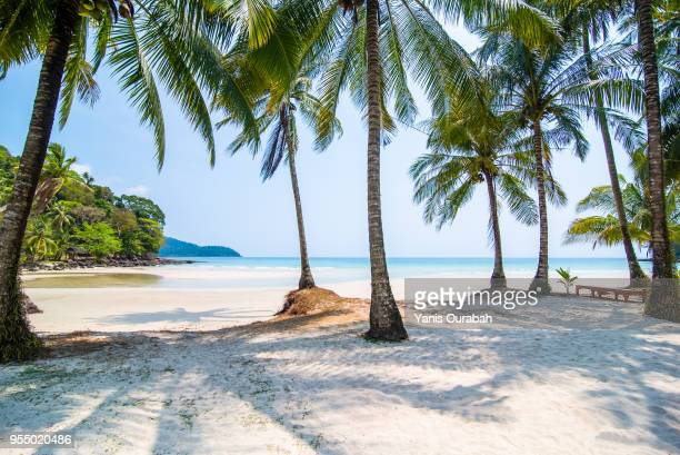 beautiful isolated beach in thailand (koh kut) with a swing - thailand stock-fotos und bilder