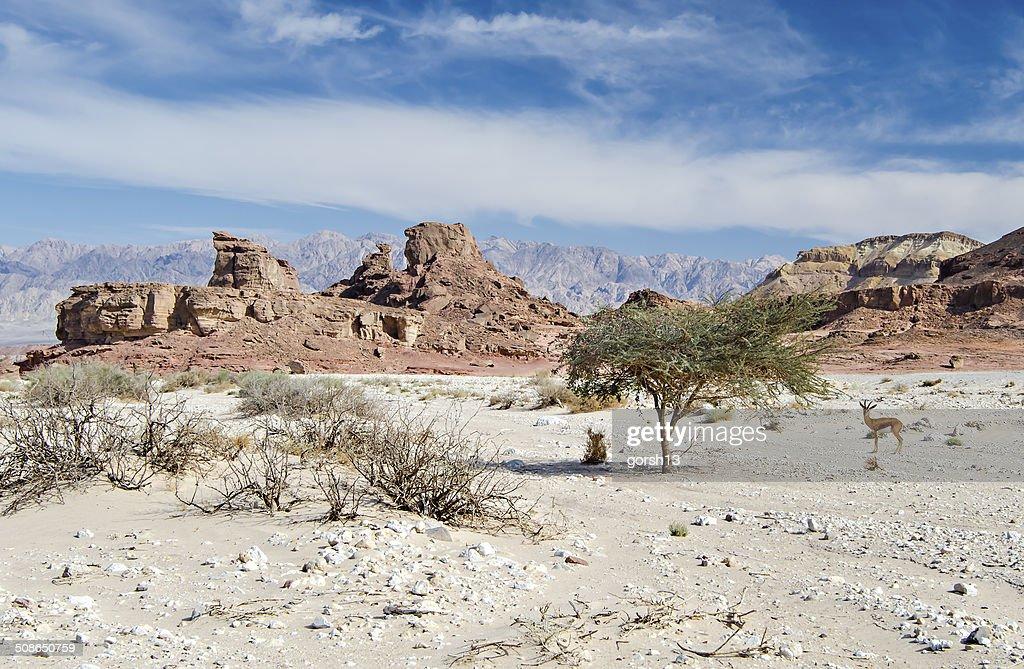 beautiful israel desert view. : Stock Photo