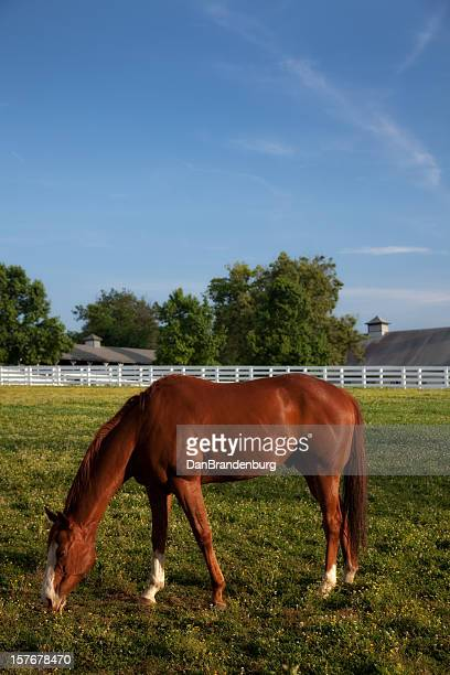 Beautiful Kentucky Horse