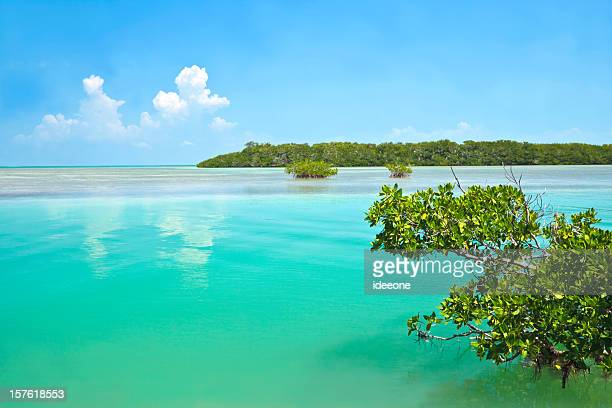 beautiful lagoon - mangrove tree stock pictures, royalty-free photos & images