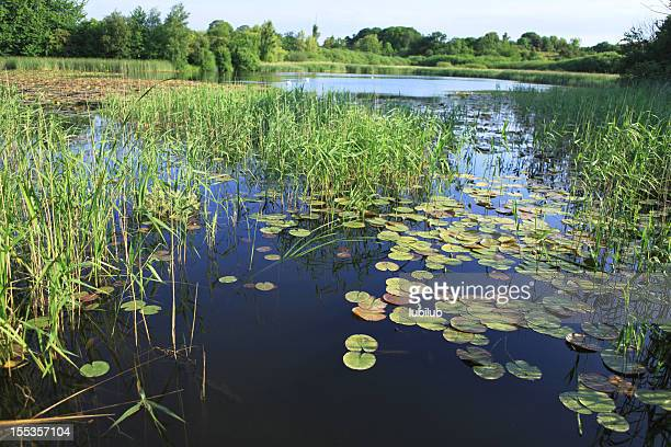 Schöner See in der dänischen Sommer Landschaft