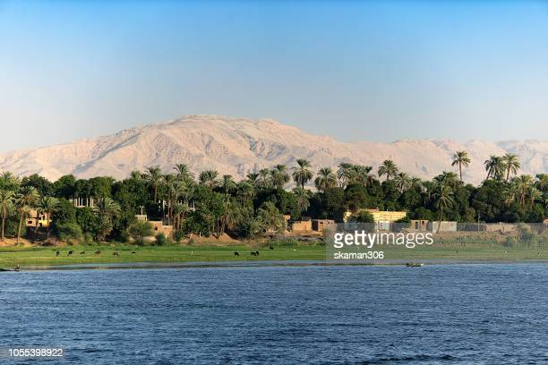 beautiful landscape date palm (phoenix dactylifera) tree and small village along nile river egypt - aswan stock pictures, royalty-free photos & images