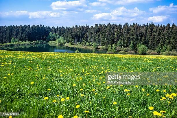 Beautiful landscape in Clausthal-Zellerfeld