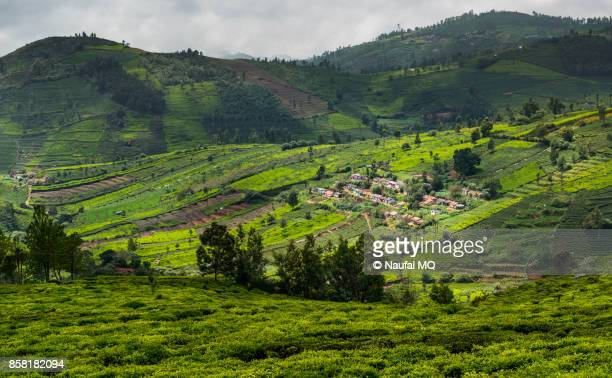 Beautiful landscape in Ooty, Tamilnadu, India