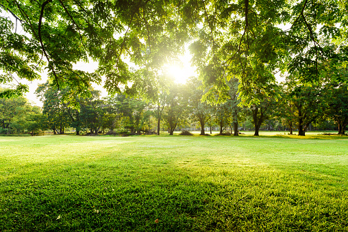 Beautiful landscape in park with tree and green grass field at morning. 1021170914