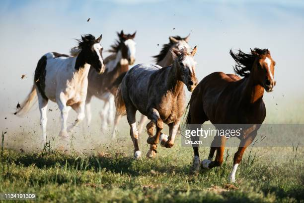 beautiful landscape in wild west in usa - wild horses galloping - horse stock pictures, royalty-free photos & images